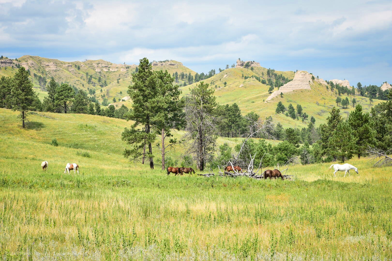 Horses graze in light-green grass meadow with grass-covered peaks in the background. Evergreen trees dot the meadow and the peaks.