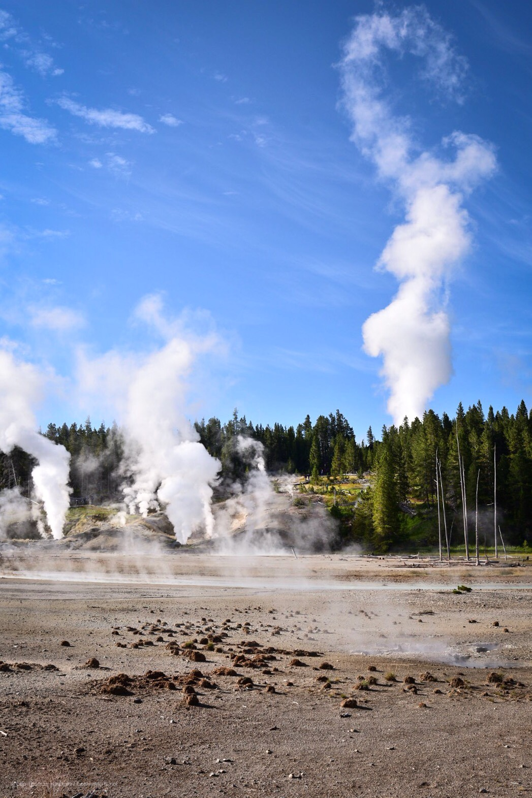 Fumaroles and geysers emit steam plumes in a grey landscape against a picturesque evergreen mountain background.