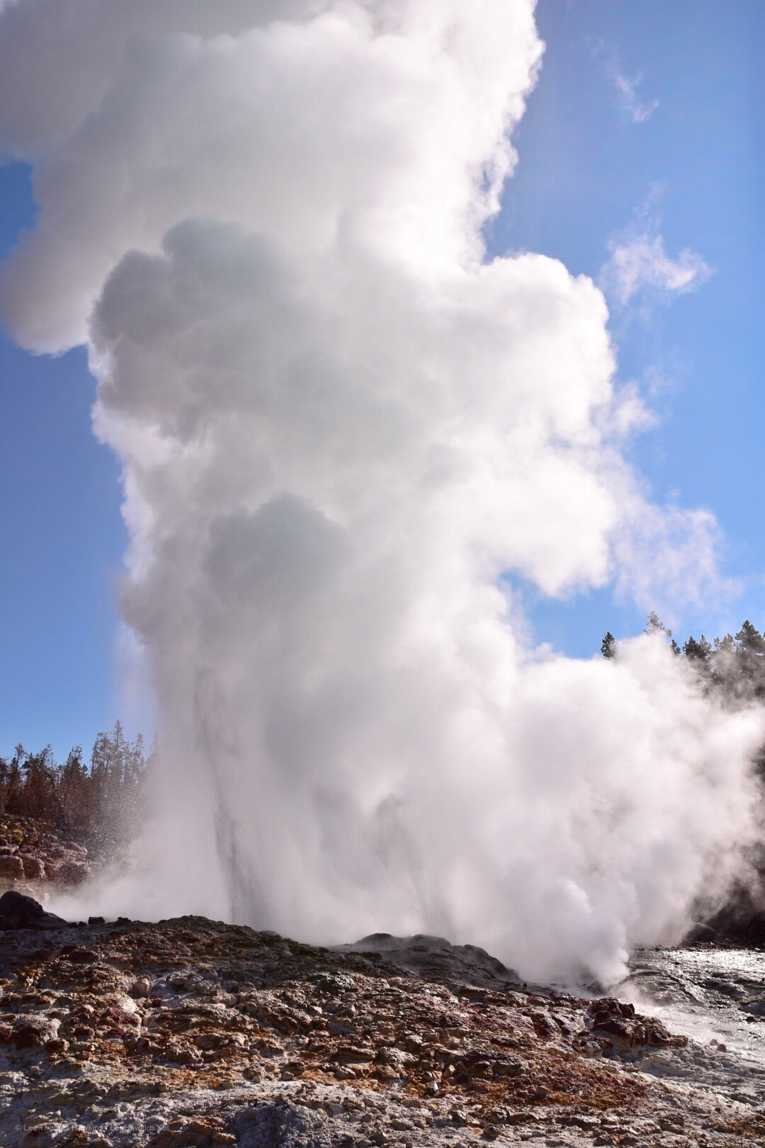 A large geyser erupting with hot water and huge plume of steam.